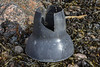 Plastic cone to deter crab predation of mussels at Petit Port on Guernsey's south coast on 20th February 2021