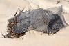 Broken hard plastic oyster mesh bag washed up at Petit Port on Guernsey's south coast on  28th November 2019