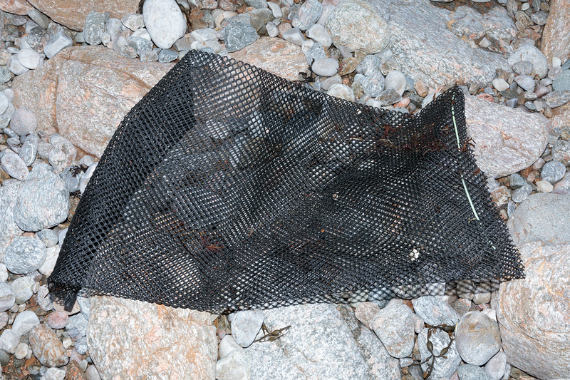 Hard plastic mesh bag used in oyster cultivation collected from Petit Port on Guernsey's south coast on 31st January 2018
