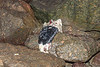 Smelly seal carcass washed into a ravine at Petit Port on Guernsey's south coast on the 18th December 2020