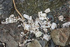 Polystyrene litter accumulates on the Pleinmont sea shore south of The Fairy Ring on Guernsey's south west coast