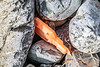 Snapped off hard plastic piece on Pleinmont's cobble shore on Guernsey's southwest coast on 9th October 2020