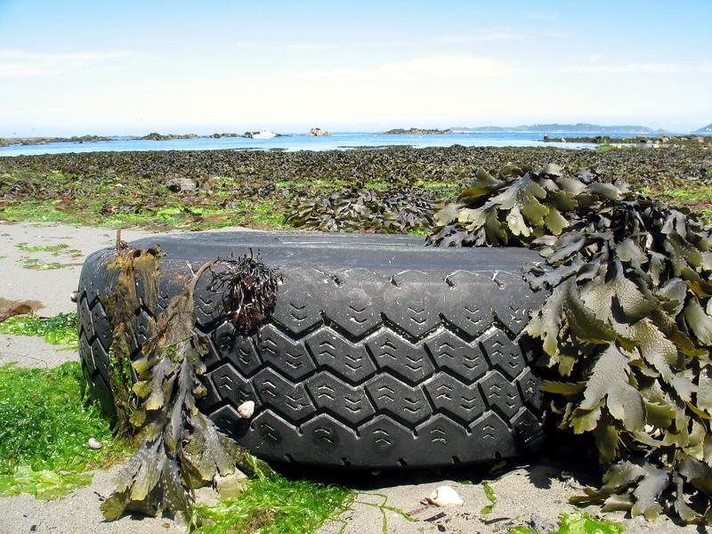 Belle Greve Bay discarded tire 020607 0026 smg