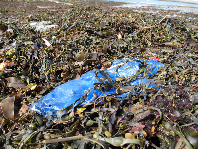 Rocquaine beach plastic styrofoam litter 120308 3683 smg