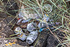 Aluminium cans discarded at Les Banques Lookout, Belle Greve Bay on Guernsey's east coast