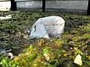 QE II SE corner plastic bag litter 010607 0011 smg