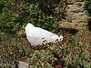 plastic carrier bag on flowers 130707 8933 smg