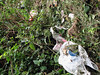 Plastic bag Fort George look out 060707 8888 smg