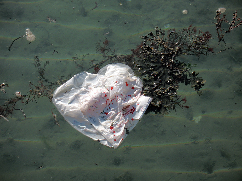 plastic bag floating in Belle Greve Bay off the east coast of Guernsey on 18th February 2008