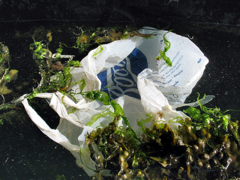 A plastic carrier bag from the chemists Boots lies in the QE II marina, St. Peter Port harbour, Guernsey on the 1 June 2007.  <br /> File No. 010607 0013<br /> ©RLLord<br /> fishinfo@guernsey.net
