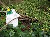 Plastic bag Val de Terre 060707 8898 smg