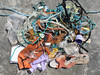 Saline Beach litter from seaweed sm area 260408 4397 smg