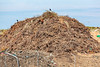 Green waste at Mont Cuet landfill site on Guernsey's north coast on 11th June 2012