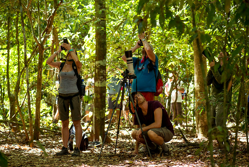 Eytan Elterman and Marco Bollinger filming a Puma in the trees in the Osa Peninsula, Costa Rica