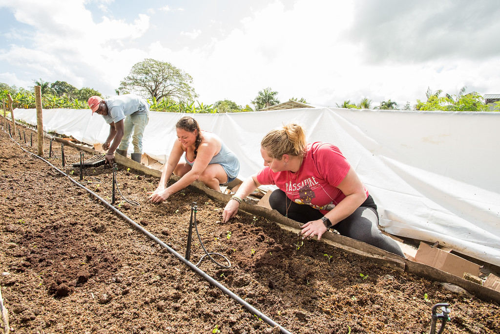 tourists work in a garden in the Dominican Republic