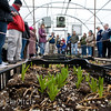 Bulbs for cut flowers emerge in a heated nursery at Wild Onion Farms.