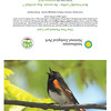 American Redstart (full card)