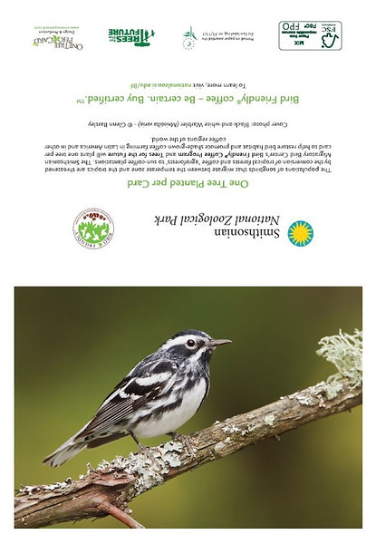 Black and White Warbler (full card)