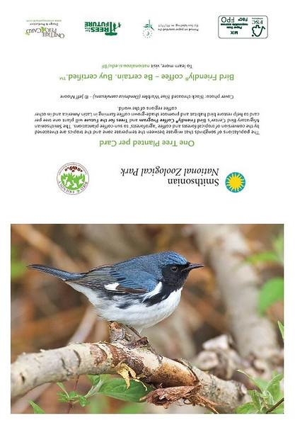 Black-throated Blue Warbler (full card)