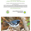 Black-throated Blue Warbler (full card)