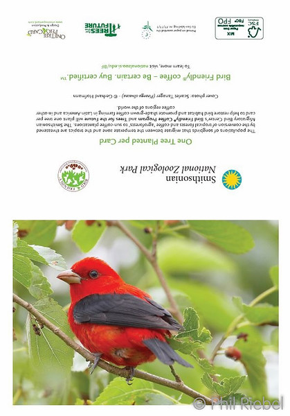 Scarlet Tanager (full card)
