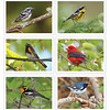 Bird-Friendly Coffee Note Cards - Set of 6 - $18.00