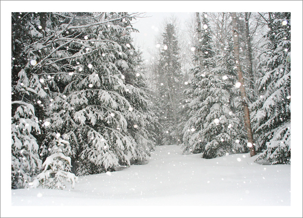 Acadian Forest Snowfall - Note card + envelope - $3.00