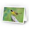 Common Yellowthroat (full view of card)