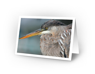 great Blue Heron (full view of card)