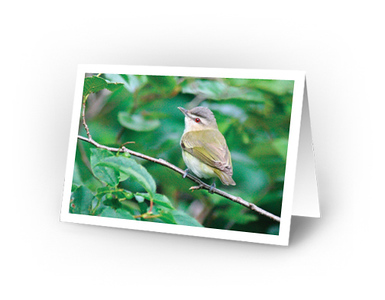 Red-eyed Vireo (full view of card)