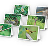 Set of 6 carbon-free cards + envelopes - $18.00