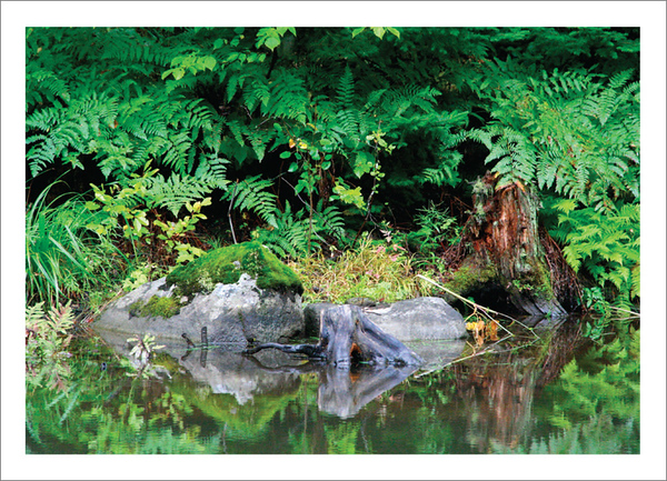 The Pond - Note card and envelope - $3.00