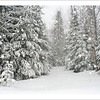 Acadian Forest Snowfall  - Christmas card + envelope - $3.00