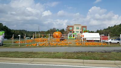 Pumpkin Patch Suwanee GA (3)