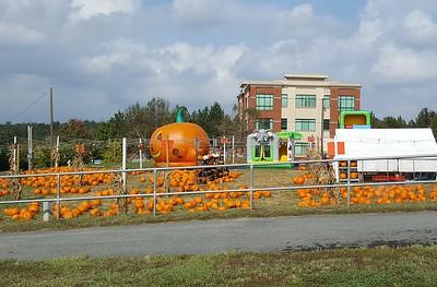 Pumpkin Patch Suwanee GA (5)