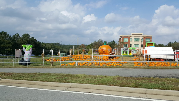 Pumpkin Patch Suwanee GA (4)
