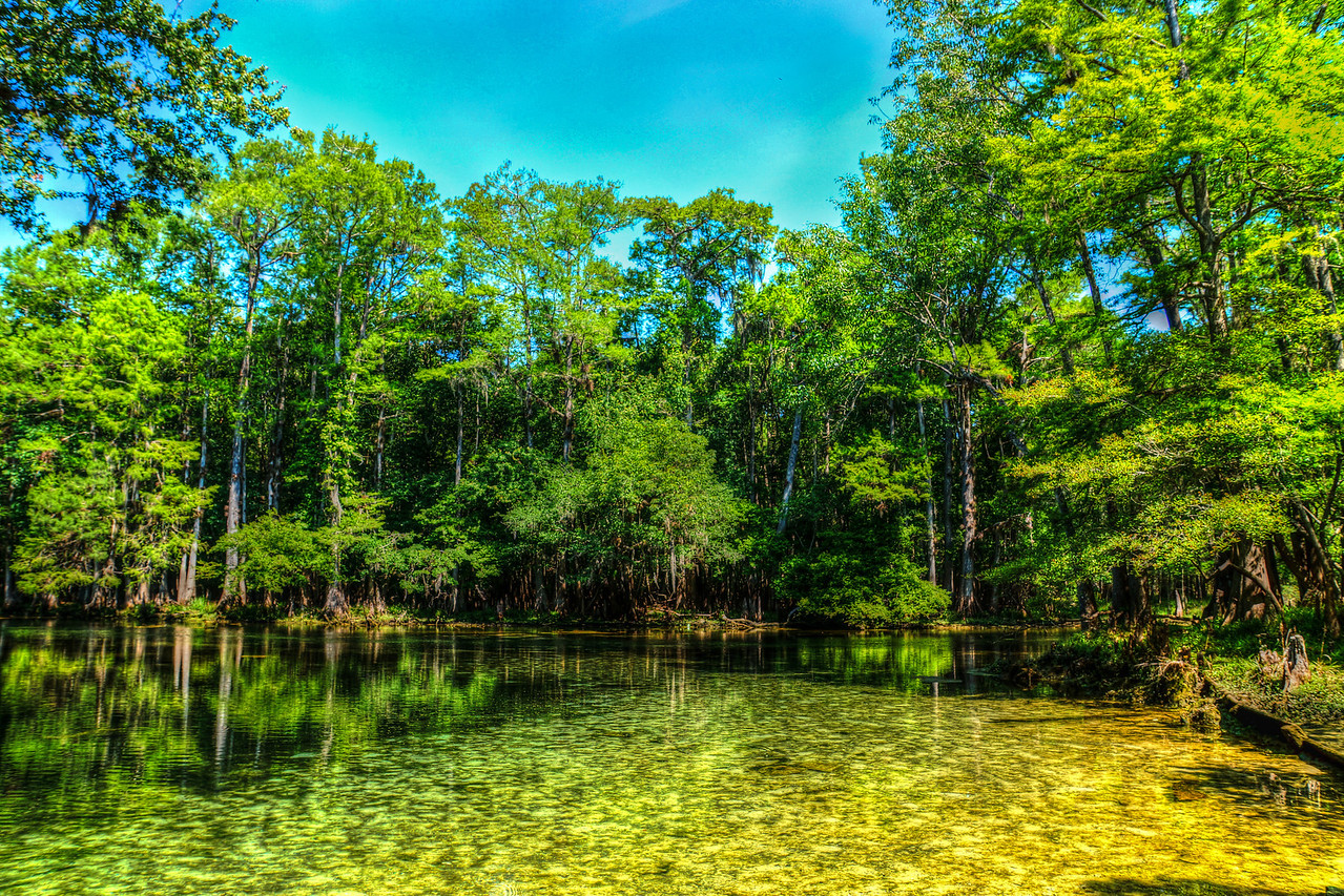Along the Manatee Spring