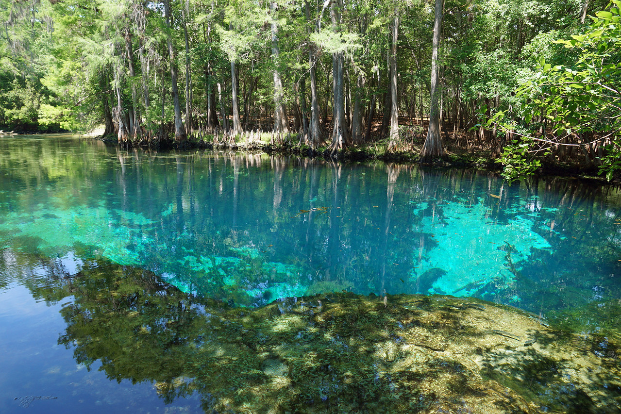 The point of outflow of Manatee Spring