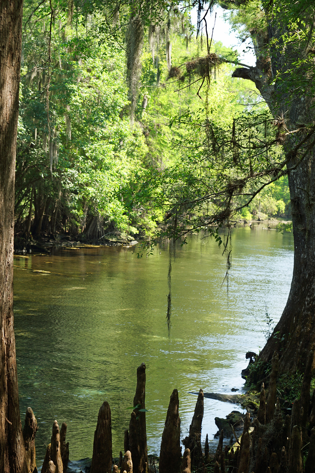 Way down upon the Suwannee River...