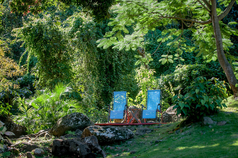 Relax under the shade of a Poinciana tree