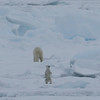 Mother and curious cub on pack ice in Palanderbukta