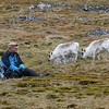John and Svalbard reindeer at Cape Millar
