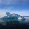 Blue iceberg off Brasvellbreen