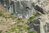 Arctic Fox, Polar phase, Alkefjellet