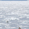 Just specks of life in a vast icy sea