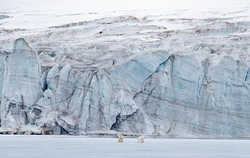 A female Polar Bear and her yearling on fast ice in Mohnbukta with the amazing glacier as a backdrop