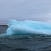 Black-legged Kittiwakes on an iceberg off Storoya