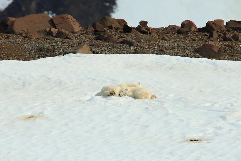 Polar_BearMother_Cubs_Svalbard_2018_Norway_0001