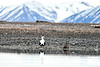 Common_Eider_Svalbard_2018_0010