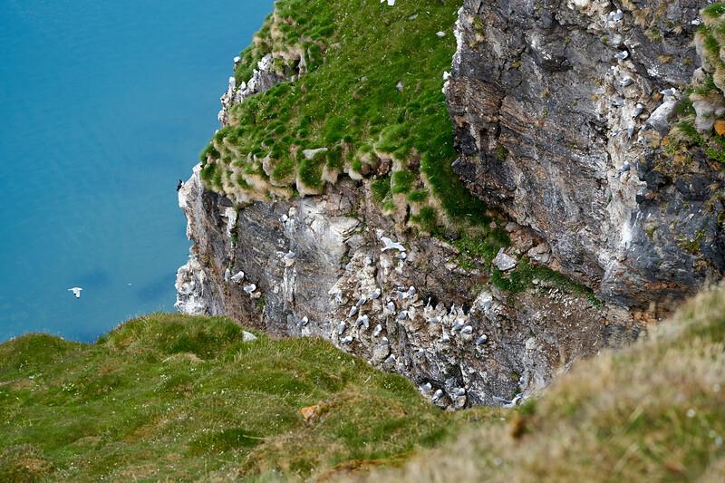 Kittywake_Cliffs_Svalbard_2018_0001